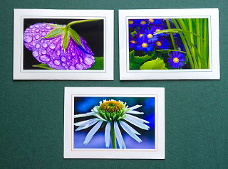 Blank Photo Cards by Kathy Admire Photography